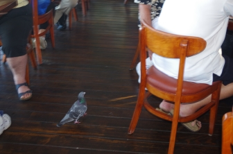 A Pigeon in the restaurant