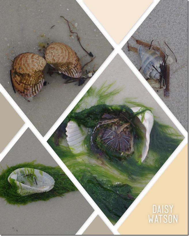 seashellsbyshore